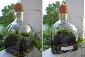What To Do With Old Tequila Bottles 11